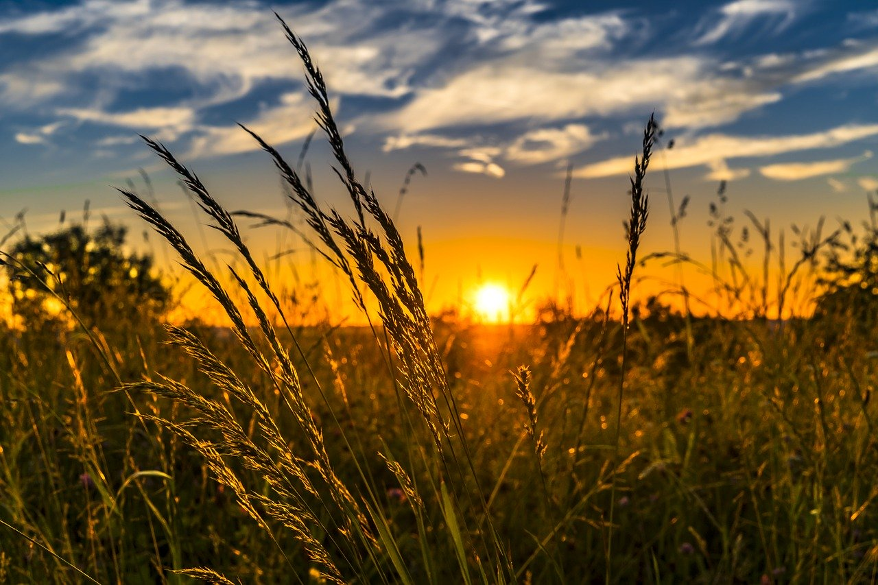 summer, sunset, meadow